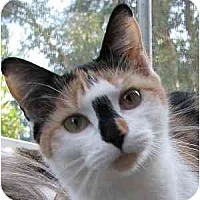 Adopt A Pet :: Kallisto - Davis, CA