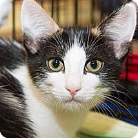 Adopt A Pet :: Megan - Irvine, CA
