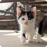 Adopt A Pet :: Oreo - Barnegat, NJ