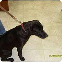 Adopt A Pet :: Candi - Altmonte Springs, FL