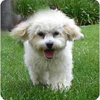 Adopt A Pet :: Abbie - La Costa, CA