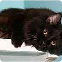 Adopt A Pet :: Cupcake - Marietta, GA