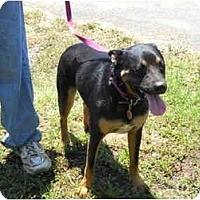 Adopt A Pet :: Ziggy - Glastonbury, CT