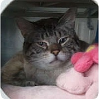 Adopt A Pet :: Tristan - Anchorage, AK