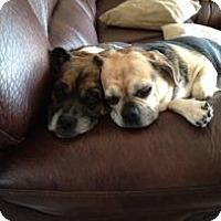 Adopt A Pet :: Keykie - Phoenix, AZ