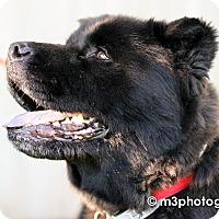 Adopt A Pet :: Ronan - Sacramento, CA