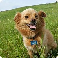 Adopt A Pet :: Lacy - San Francisco, CA