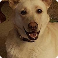 Adopt A Pet :: Lilly2 - Pompton Lakes, NJ