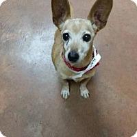 Adopt A Pet :: Neil - Scottsdale, AZ