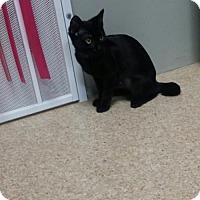 Adopt A Pet :: Bobbi - Ventura, CA