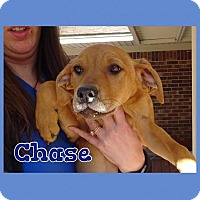 Adopt A Pet :: Chase-pending adoption - Manchester, CT