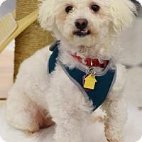 Adopt A Pet :: George D4075 - Fremont, CA