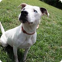 Adopt A Pet :: Sugar - Sarasota, FL