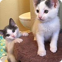 Adopt A Pet :: Michael Milky and Michelle - Mission Viejo, CA