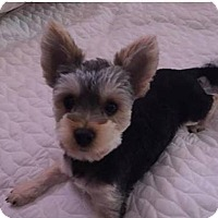 Adopt A Pet :: Winston - Lorain, OH