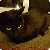 Adopt A Pet :: Spirit - Sacramento, CA
