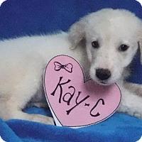 Adopt A Pet :: Kay-c - Batesville, AR