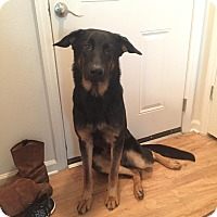 Adopt A Pet :: Doug (Guest) - Roswell, GA