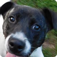 Adopt A Pet :: ReeRee - MINNEAPOLIS, KS