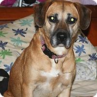 Adopt A Pet :: Sushi - Bardonia, NY