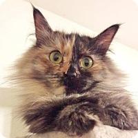 Adopt A Pet :: Trixie - Davis, CA