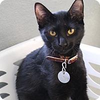 Adopt A Pet :: Danarus - Bradenton, FL