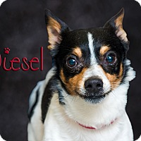 Adopt A Pet :: Diesel - Somerset, PA