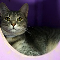 Adopt A Pet :: Pigeon - Tucson, AZ
