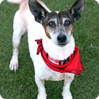 Adopt A Pet :: Dino - Wichita, KS