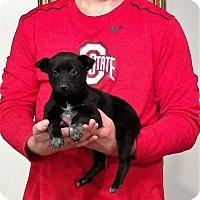 Adopt A Pet :: Rey - Gahanna, OH