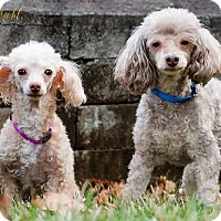 Adopt A Pet :: Nyree and Teddy- BONDED PAIR - Pittsburgh, PA