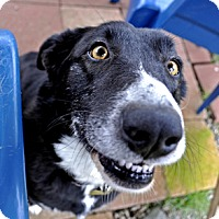 Adopt A Pet :: Patches - Woodburn, OR