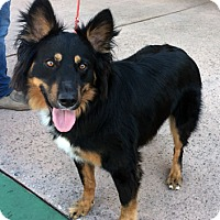 Adopt A Pet :: Zeus - Ventura, CA