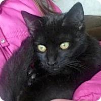Adopt A Pet :: Maura - Buhl, ID