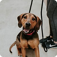 Adopt A Pet :: Dee Dee - Chino Hills - Chino Hills, CA