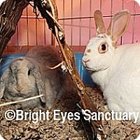 Adopt A Pet :: Bubbles&Orion - Rockville, MD
