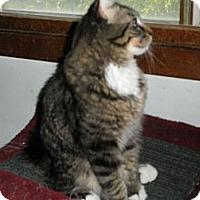 Adopt A Pet :: Goober - Milwaukee, WI