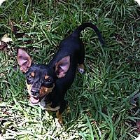 Adopt A Pet :: Emma - Vidor, TX