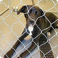 Adopt A Pet :: Joey - Tunbridge, VT