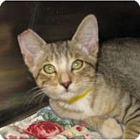 Adopt A Pet :: Jason - Modesto, CA