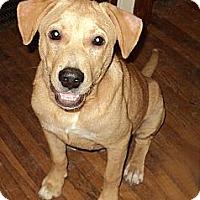 Adopt A Pet :: Linus - Tallahassee, FL