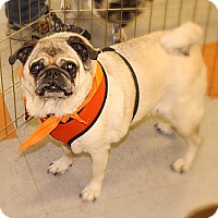 Adopt A Pet :: Olie - Austin, TX
