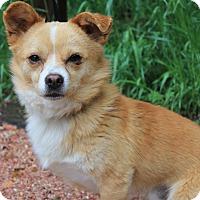 Adopt A Pet :: Gavin - Fountain, CO
