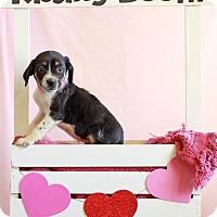 Adopt A Pet :: Eliza - Waldorf, MD