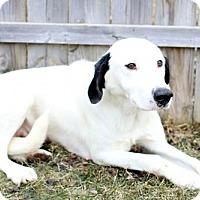 Adopt A Pet :: Daisy - Bloomington, MN