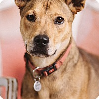 Adopt A Pet :: Maggie - Portland, OR
