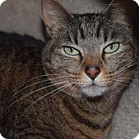 Adopt A Pet :: Cate - Coronado, CA