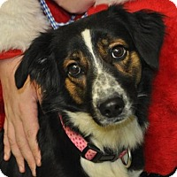 Adopt A Pet :: Dolly - Erwin, TN