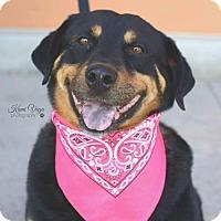Adopt A Pet :: Latona - Salt Lake City, UT
