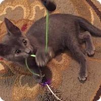 Adopt A Pet :: Marcy - Philadelphia, PA